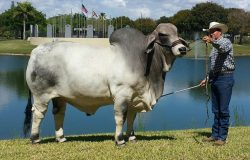 2014 Show Bull of the Year